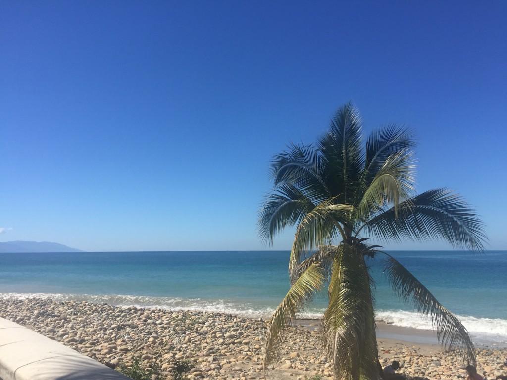 SandFleas in Mexico